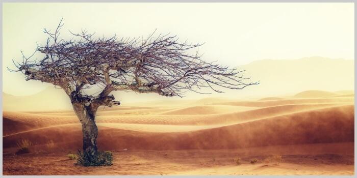 Притча «Ветер перемен»